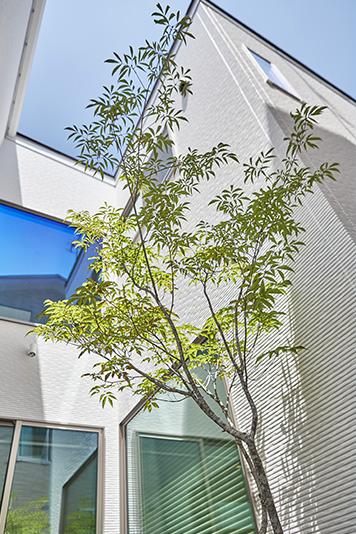2階の寝室や廊下からも眺めることができる中庭。夜間、シンボルツリーをライトで照らすと、幻想的な雰囲気へと様変わりします。